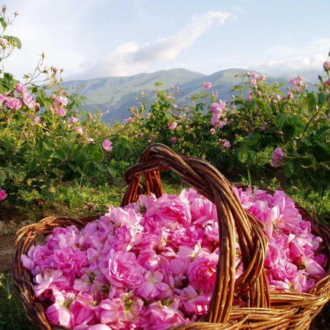 Градът на розите е Казанлък