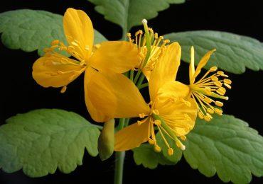 Рецепти с полезни билки – коприва при анемия, репей срещу ишиас, жълтурче против гъбички и още …