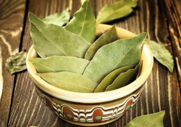 Дафинов лист помага при нервна възбуда, рак на гърлото, черния дроб и далака, болки в ставите и още…Вижте тези рецепти за лечение с него!