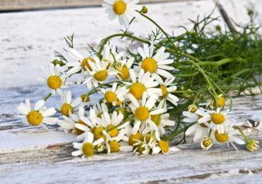 Лечение на диария с народни средства – билки, диета, съвети