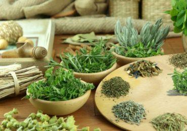 Тези билки използвайте при липса на апетит и за общо укрепване на организма