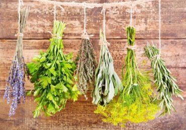 Как да си консервираме коприва и други билки и зелени подправки – спанак, лапад, киселец, босилек и още…
