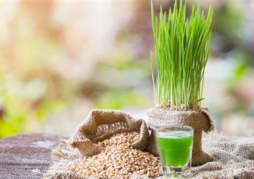 Лечебни рецепти за здраве – ментов оцет, мляко от хума, сок от магданоз и още…