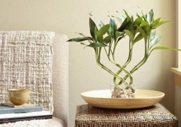 Как да разположим мебелите и вещите в жилището по правилата на фън шуй, за да увеличим финансите си?