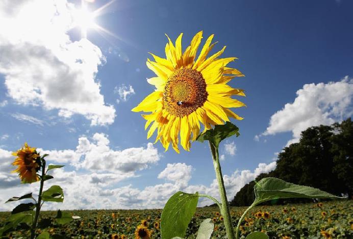 Слънцето намалява кръвното, лекува депресия и засилва имунната ни система! Вижте как!