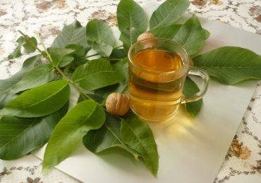 Рецепти за лечение с листата на ореховото дърво – кога се берат и как се приготвят
