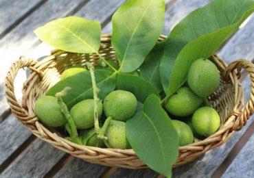 Зелените орехи лекуват високо кръвно, бронхит, гастрит, запек и още куп болести – вижте рецепти и съвети за лечение