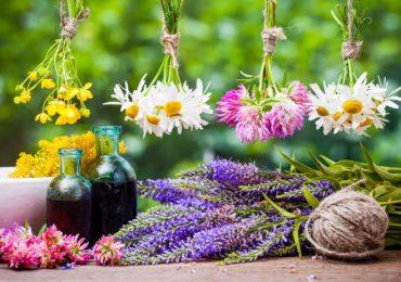 Цветята лекуват – ето каква е ползата, кои са най-лековитите от тях и рецепти за лечение