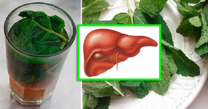 Черният дроб – как да се грижим за него – това са съвети за правилно хранене, рецепти с билки и още…