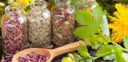 Мигренозно главоболие, болки в ставите, нередовна менструация, хъркане и цистит – ето как да си помогнете с билки